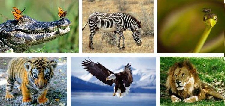 10 Fantásticas Fotos De Animales Salvajes