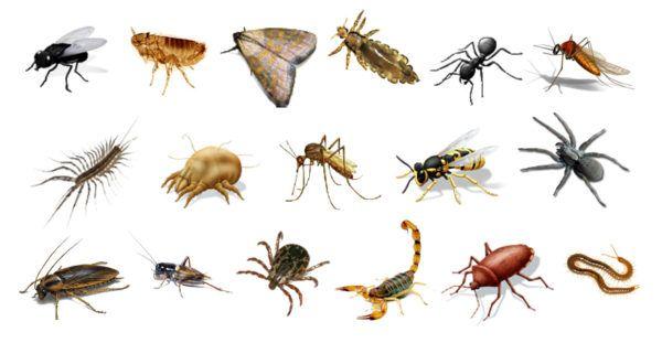 Animales Invertebrados: Qué son, Información, Nombres y Características