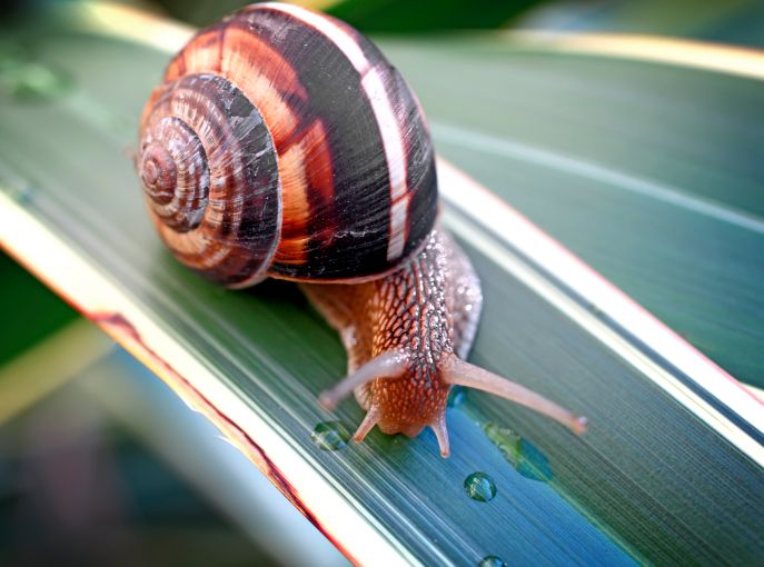 caracol-animal-invertebrado