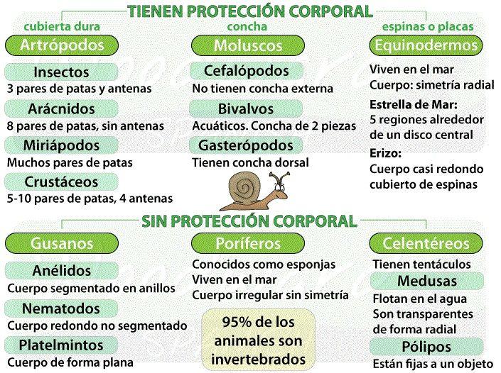 clasificación animales invertebrados
