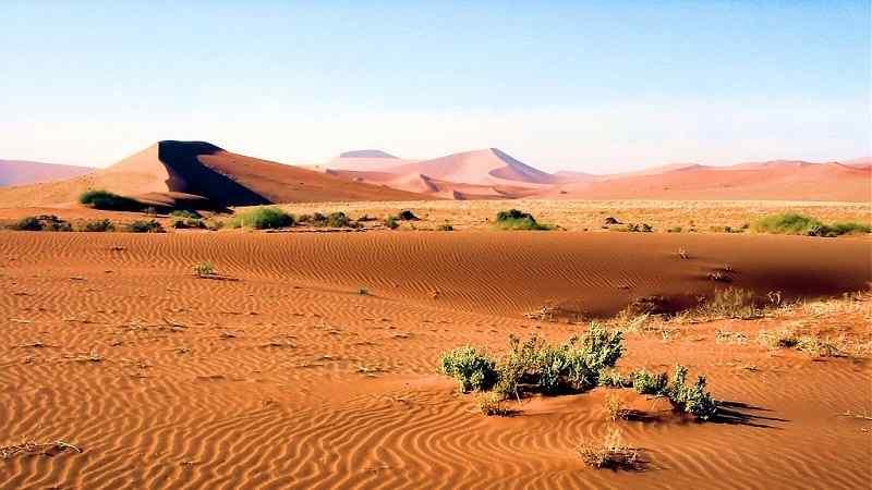 Lista de Animales del Desierto en Peligro de Extinción