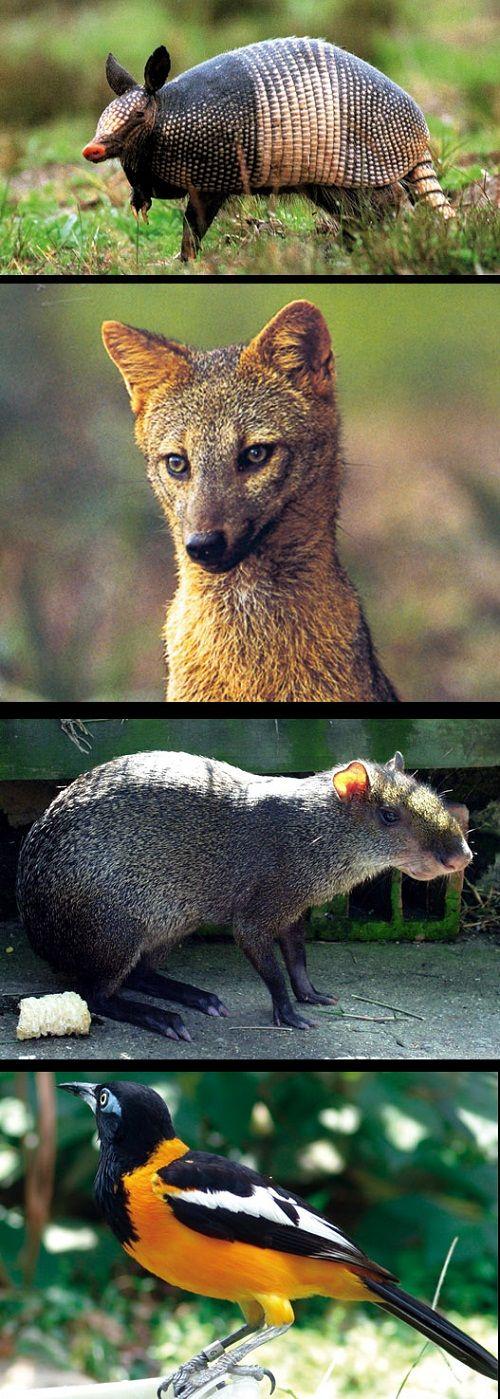Animales del Bosque Templado: Cuáles son, Nombres y Cómo Viven ...