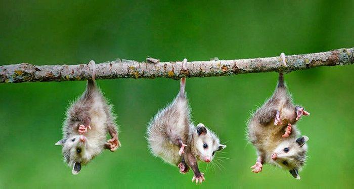 Animales del Bosque Templado: Cuáles son, Nombres y Cómo Viven