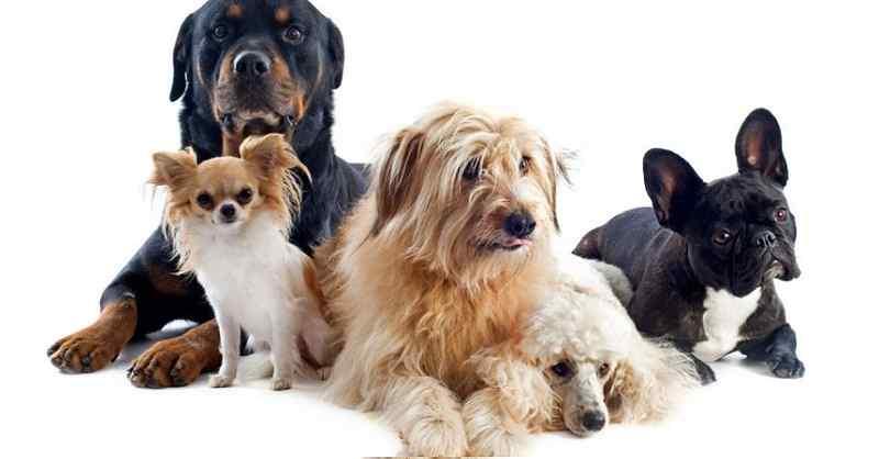 aspectos sobre perros