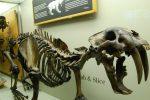 Animales Extintos en el Desierto Poco Conocidos
