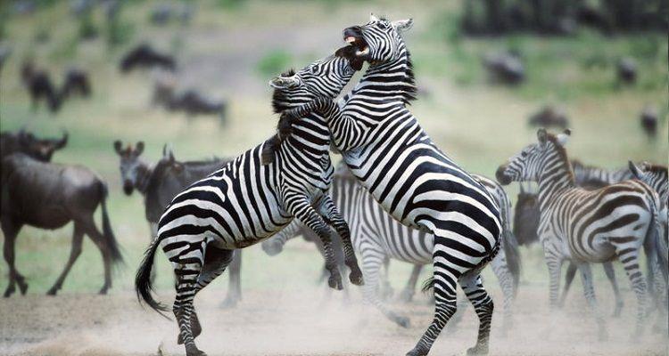 Animales Salvajes: Nombres, Información y Características Importantes