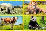 Animales Terrestres: Lista, Especie y Características
