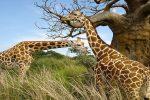 Los 10 Animales más Salvajes del Mundo