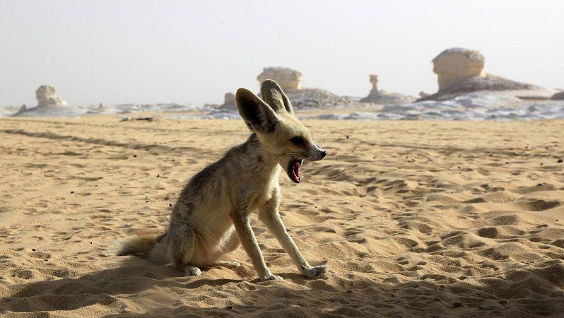 Especies Amenazadas y en Peligro de Extinción del Desierto del Sahara