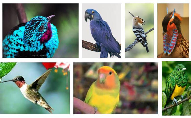 12 Aves Exóticas más Asombrosas y Raras del Mundo